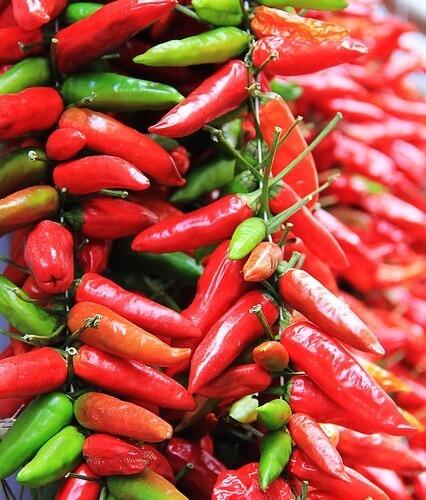 chili-gourmandises-a-la-loupe