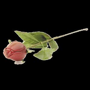 rose en chocolat belge